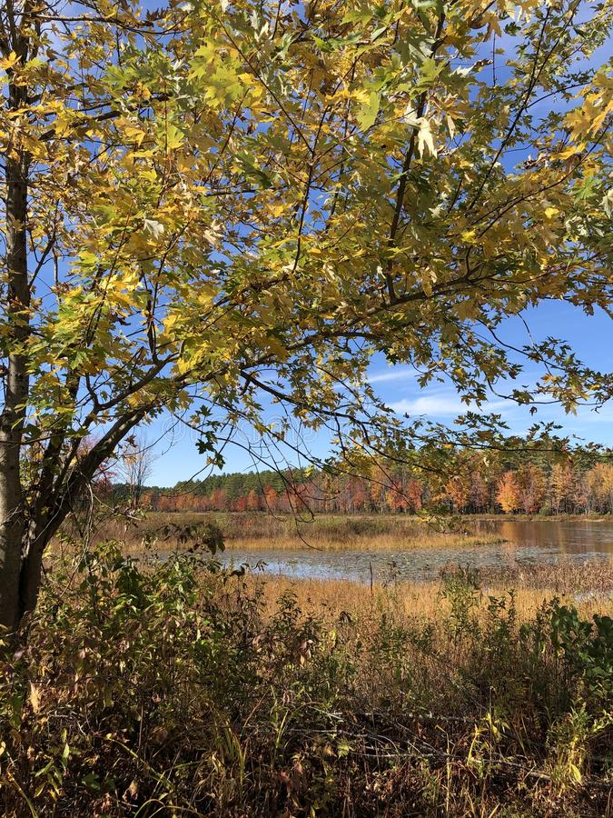Κίτρινα φύλλα το φθινόπωρο στοκ φωτογραφίες με δικαίωμα ελεύθερης χρήσης