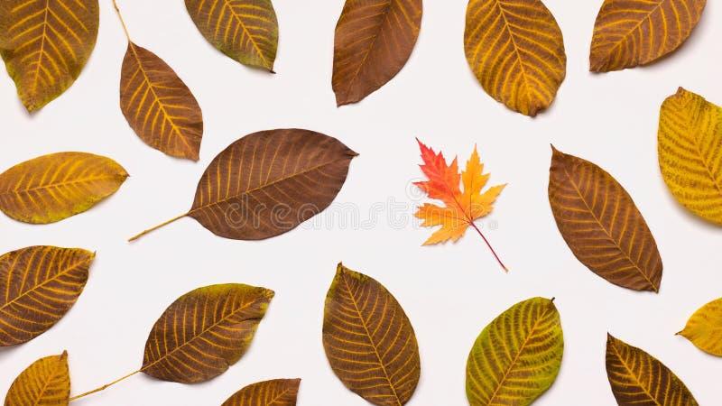 Κίτρινα φύλλα φθινοπώρου αφορημένος κάτω το άσπρο υπόβαθρο στοκ φωτογραφία με δικαίωμα ελεύθερης χρήσης