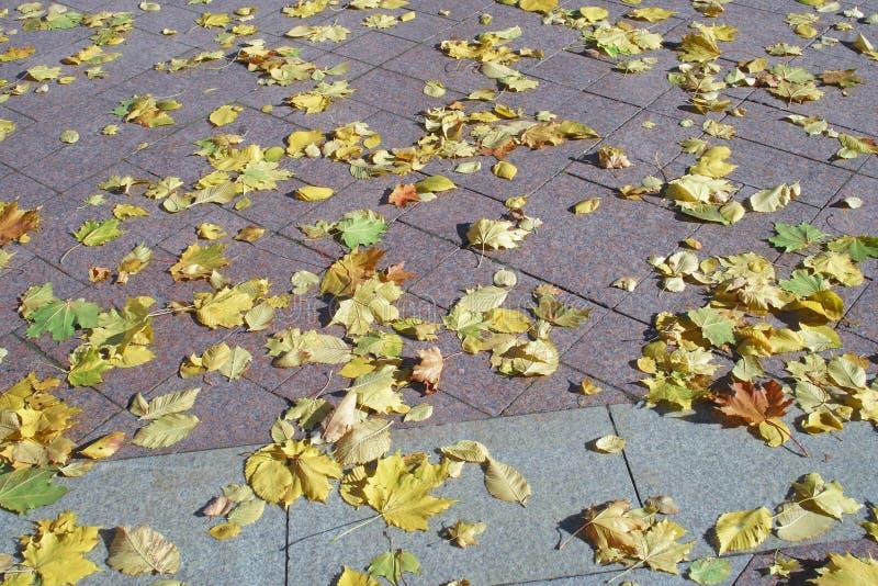Κίτρινα φύλλα φθινοπώρου σε ένα κεραμίδι γρανίτη σε ένα πάρκο πόλεων στοκ φωτογραφίες
