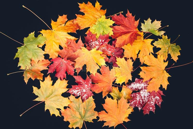 Κίτρινα φύλλα φθινοπώρου στο σκοτεινό υπόβαθρο στοκ φωτογραφία με δικαίωμα ελεύθερης χρήσης