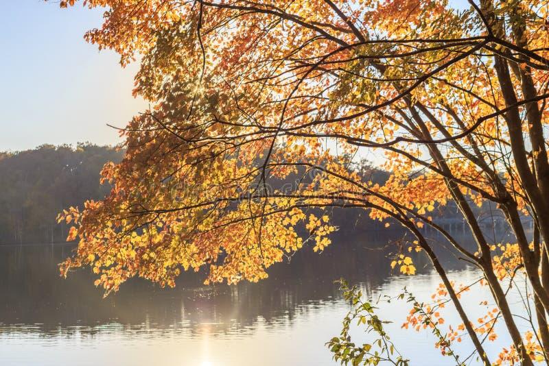 Κίτρινα φύλλα του δέντρου με την αντανάκλαση ήλιων πέρα από τη λίμνη στοκ εικόνες
