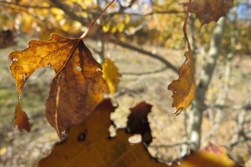 Κίτρινα φύλλα φθινοπώρου σε ένα φωτεινό υπόβαθρο μπλε ουρανού στοκ εικόνες
