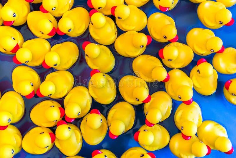 Κίτρινες λαστιχένιες πάπιες που επιπλέουν στο νερό στοκ εικόνες