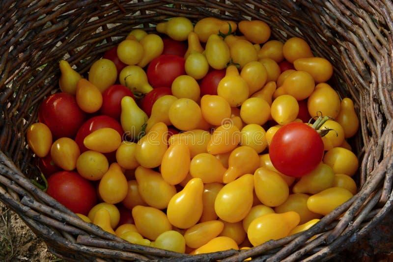 Κίτρινες και κόκκινες ντομάτες σε ένα ψάθινο καλάθι στοκ εικόνα με δικαίωμα ελεύθερης χρήσης