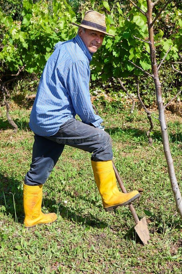 Κίτρινες μπότες της Farmer που λειτουργούν τον τομέα φτυαριών στοκ εικόνα