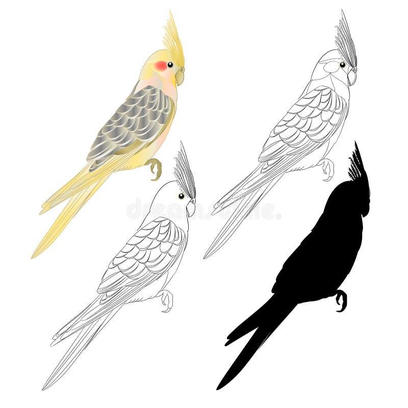Κίτρινες περίληψη και σκιαγραφία ύφους watercolor παπαγάλων πουλιών cockatiel χαριτωμένες τροπικές αστείες άσπρο εκλεκτής ποιότητ διανυσματική απεικόνιση