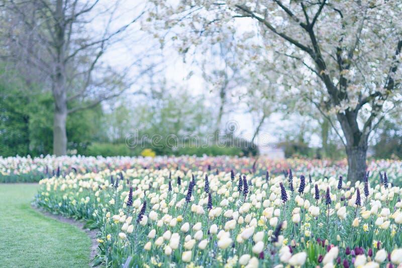 Κίτρινες τουλίπες και άλλα ζωηρόχρωμα λουλούδια σε ένα υπόβαθρο πάρκων S στοκ εικόνες