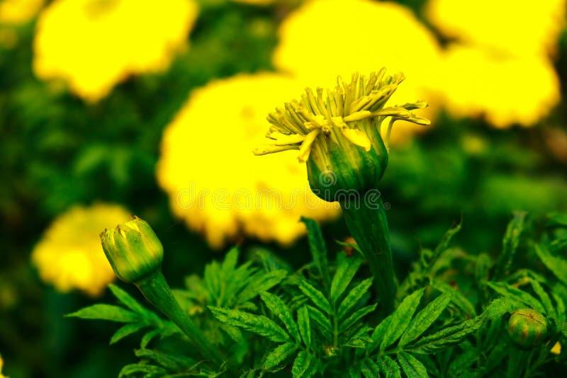 Κίτρινη αγάπη στοκ φωτογραφία με δικαίωμα ελεύθερης χρήσης