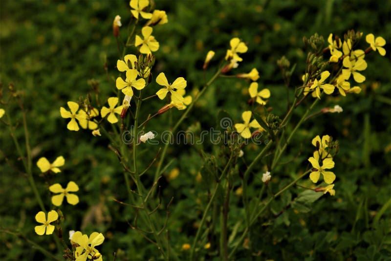 Κίτρινη ανασκόπηση λουλουδιών στοκ φωτογραφίες