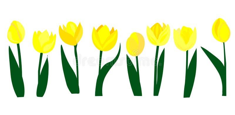 Κίτρινη απεικόνιση τουλιπών Ιστού Χλωρίδα, εγκαταστάσεις, λουλούδια r απεικόνιση αποθεμάτων