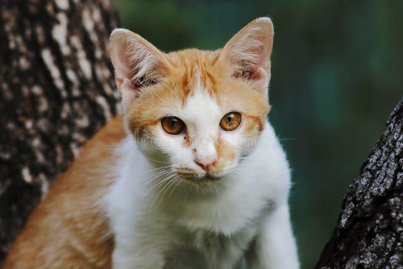 Κίτρινη γάτα οδών στοκ εικόνα
