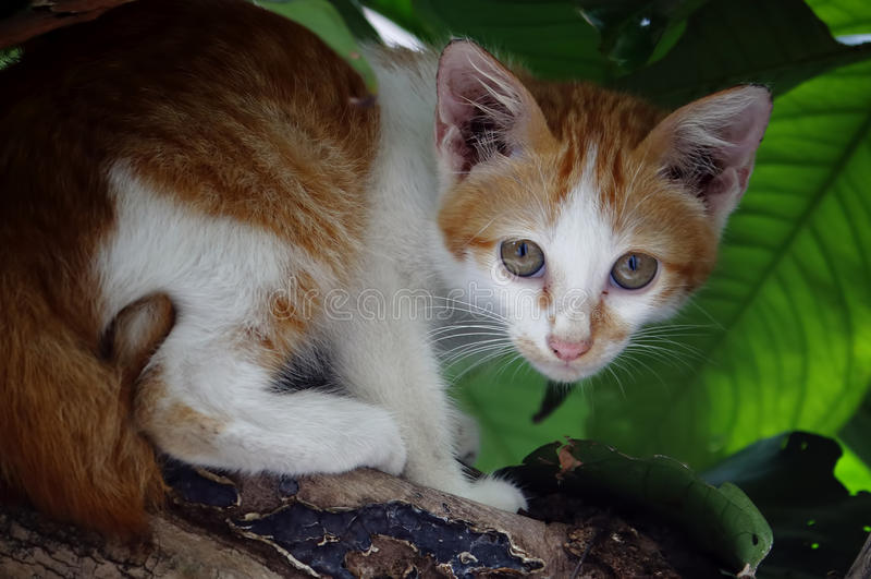 Κίτρινη γάτα οδών στοκ εικόνες