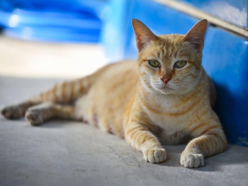 Κίτρινη γάτα στοκ φωτογραφία με δικαίωμα ελεύθερης χρήσης