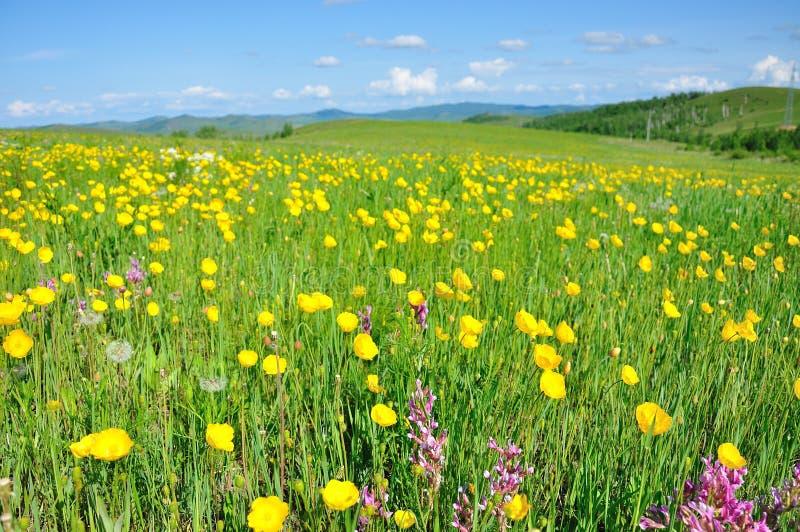Κίτρινη θάλασσα λουλουδιών στοκ φωτογραφία με δικαίωμα ελεύθερης χρήσης