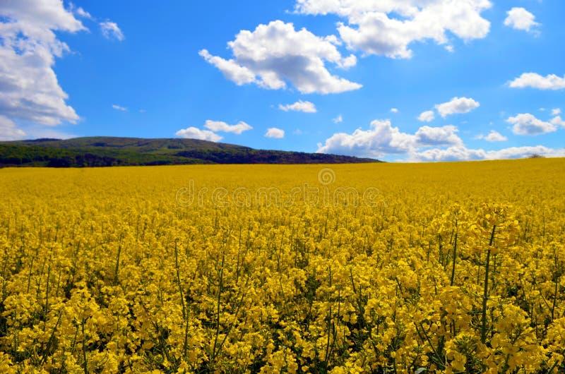 Κίτρινη θάλασσα στοκ εικόνες