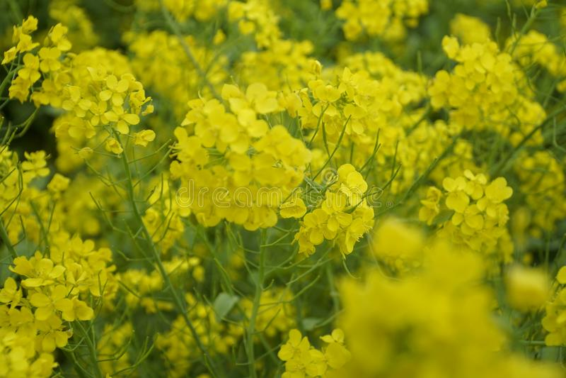 Κίτρινη θέα στοκ εικόνες