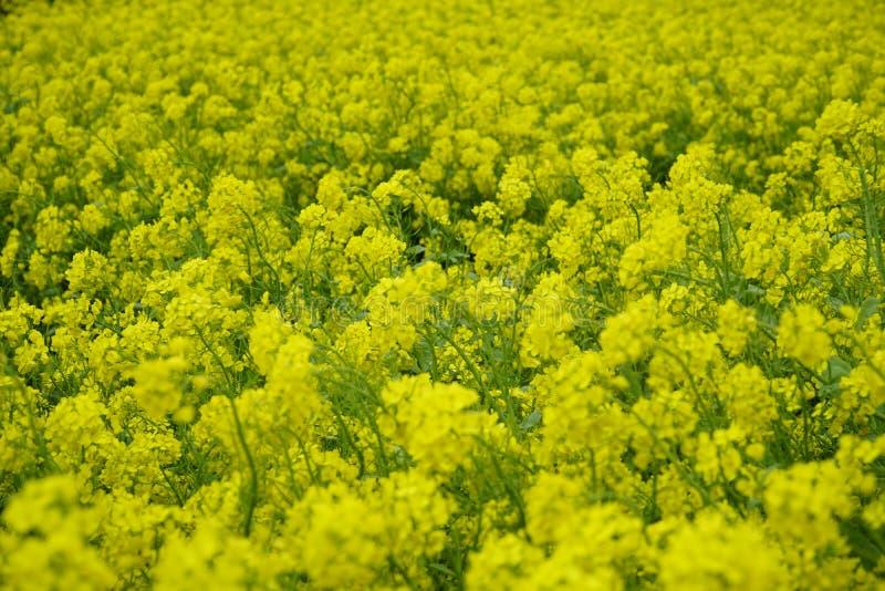 Κίτρινη θέα στοκ εικόνες με δικαίωμα ελεύθερης χρήσης