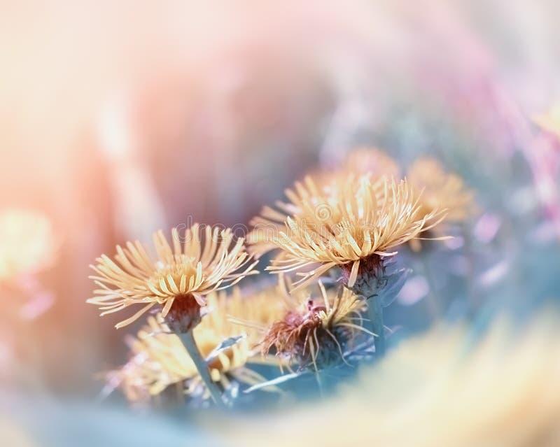 Κίτρινη κινηματογράφηση σε πρώτο πλάνο λουλουδιών στοκ εικόνα με δικαίωμα ελεύθερης χρήσης