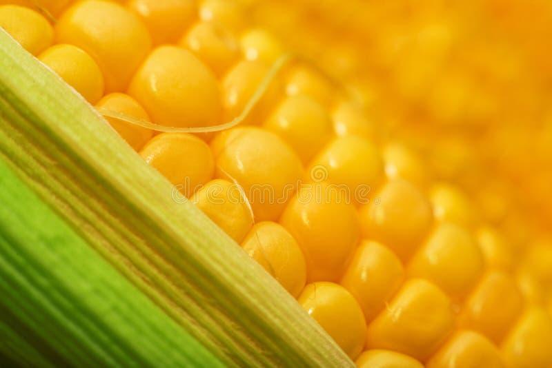 Κίτρινη μακροεντολή σπαδίκων καλαμποκιού Sweey στοκ εικόνες