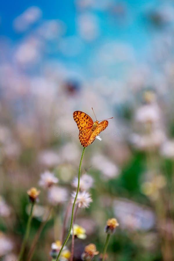 Κίτρινη πεταλούδα, μουτζουρωμένα λουλούδια, μπλε ουρανός στοκ φωτογραφία