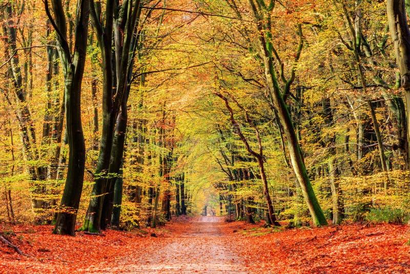 Κίτρινη πορεία φθινοπώρου στοκ εικόνες