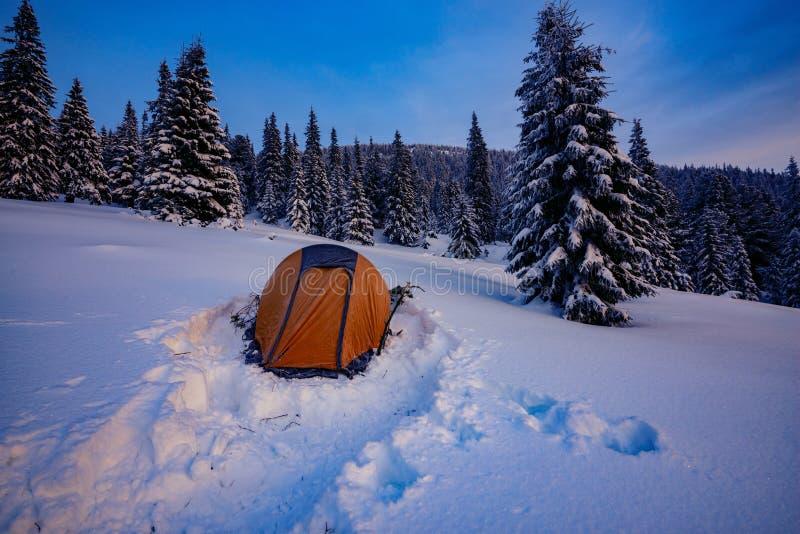 Κίτρινη σκηνή μεταξύ των χιονισμένων δέντρων πεύκων στοκ εικόνες με δικαίωμα ελεύθερης χρήσης