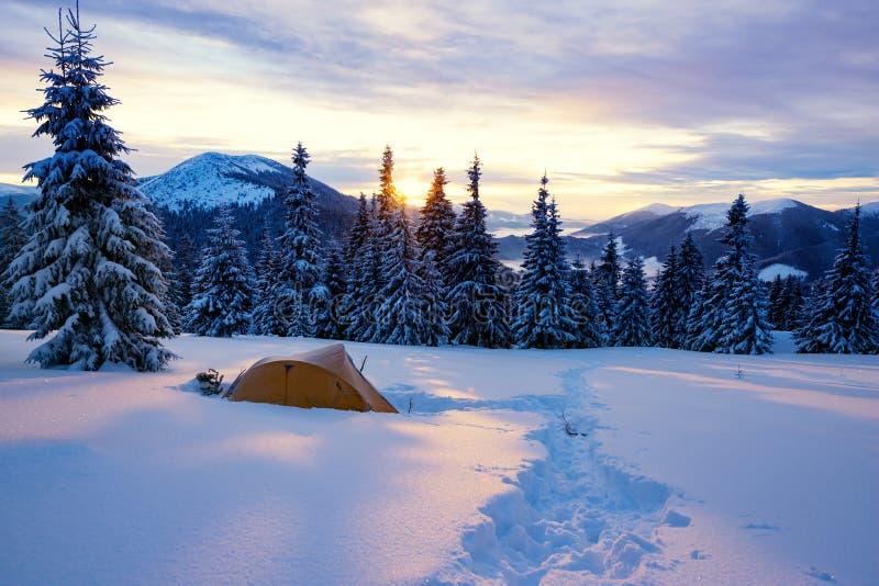 Κίτρινη σκηνή μεταξύ των χιονισμένων δέντρων πεύκων στοκ φωτογραφίες