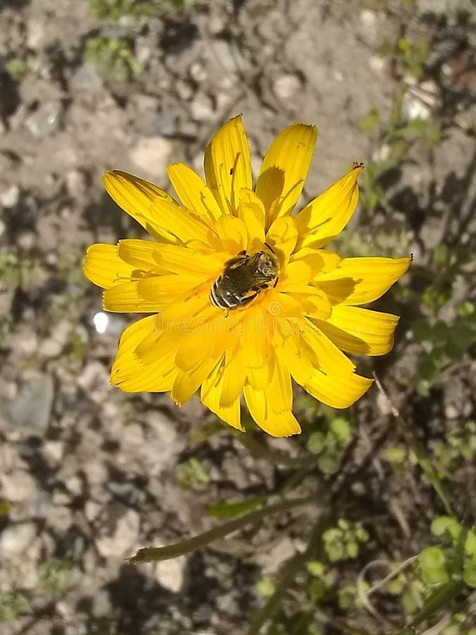 Κίτρινη τοπ άποψη λουλουδιών SH στοκ εικόνες με δικαίωμα ελεύθερης χρήσης