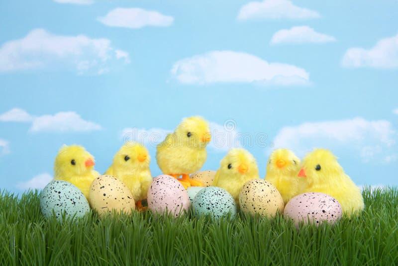 Κίτρινοι νεοσσοί με τα speckled αυγά Πάσχας στη χλόη στοκ φωτογραφία με δικαίωμα ελεύθερης χρήσης