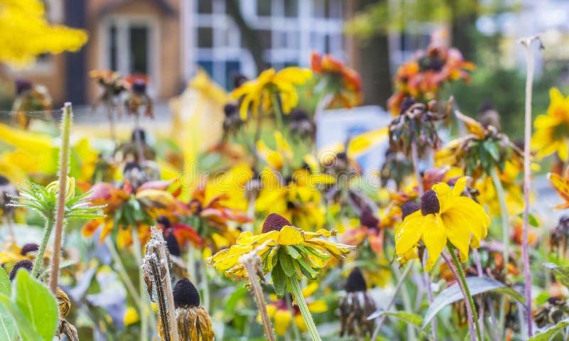 Κίτρινοι λουλούδια και ιστοί αράχνης φθινοπώρου εικονικής παράστασης πόλης υποβάθρου στοκ φωτογραφίες με δικαίωμα ελεύθερης χρήσης