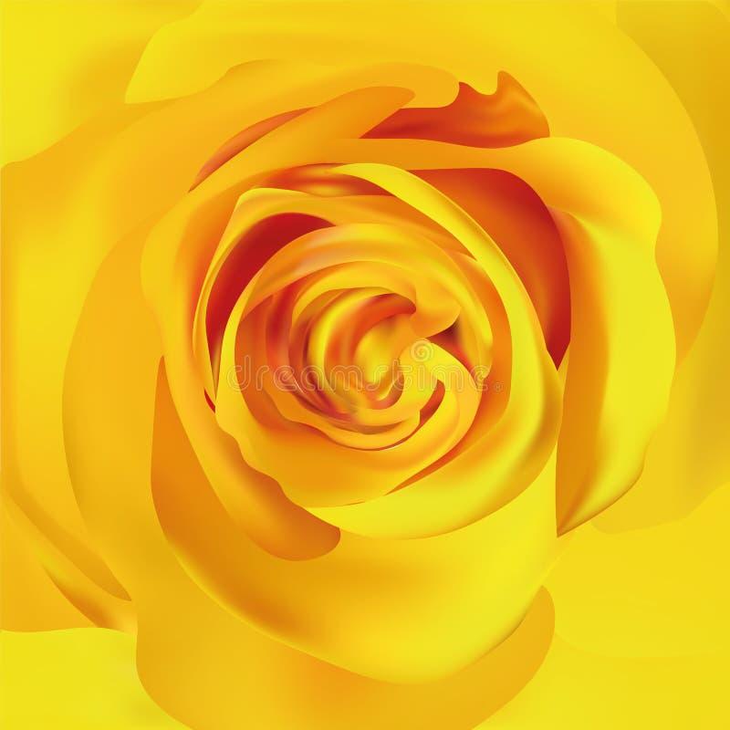 Κίτρινος αυξήθηκε κοντά επάνω τρισδιάστατος ρεαλιστικός αυξήθηκε Όμορφος αυξήθηκε r απεικόνιση αποθεμάτων