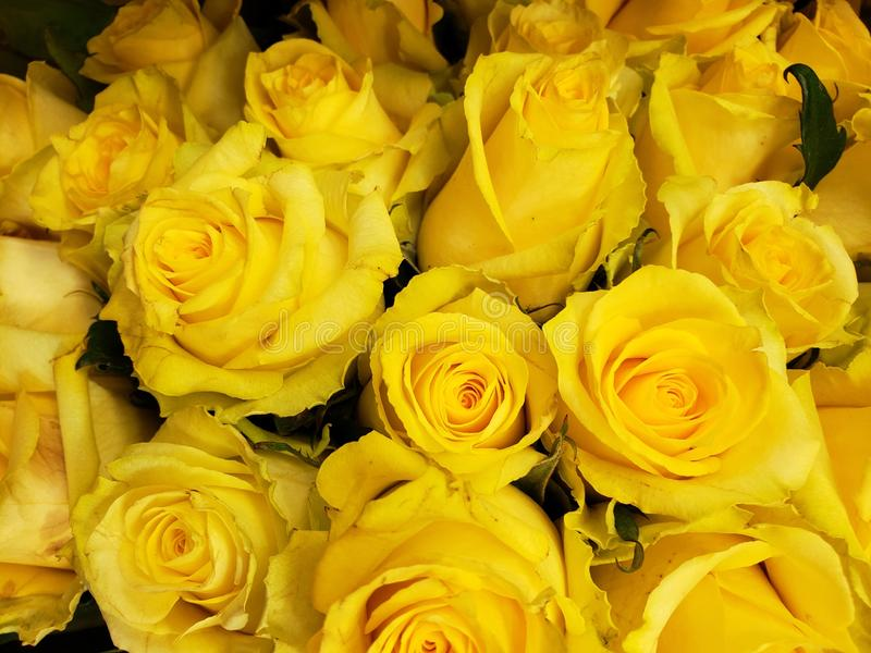 κίτρινος αυξήθηκε λουλούδια σε μια floral ανθοδέσμη, ένα υπόβαθρο και μια σύσταση στοκ εικόνες