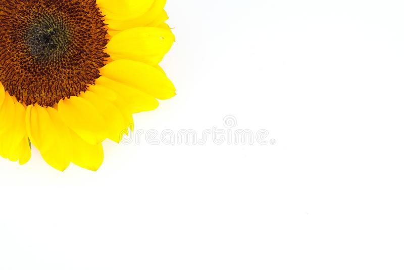 Κίτρινος ηλίανθος στην πλήρη άνθιση στοκ εικόνες