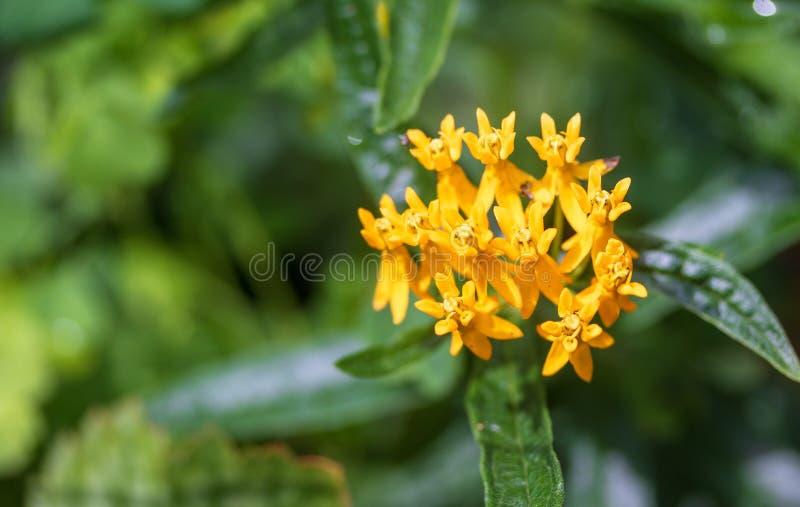 Κίτρινος η μακρο εικόνα λουλουδιών στοκ φωτογραφία