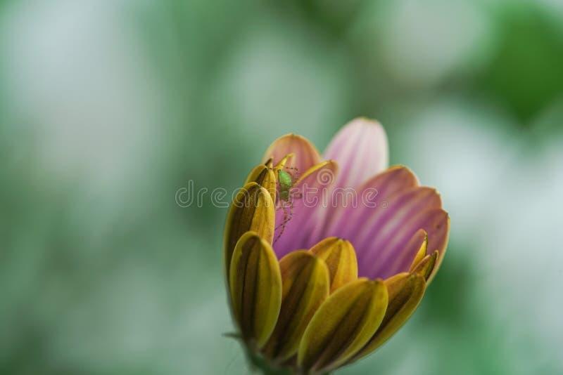 Κίτρινος και άσπρος υπαίθριος κήπος wildflower με την αράχνη στοκ φωτογραφίες με δικαίωμα ελεύθερης χρήσης