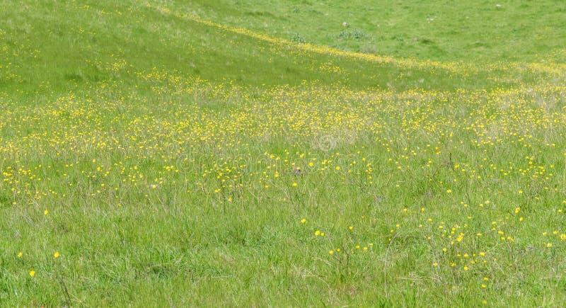 Κίτρινος και πράσινος στοκ φωτογραφία με δικαίωμα ελεύθερης χρήσης