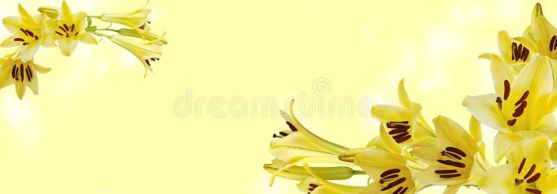 Κίτρινος κρίνος στο άσπρο υπόβαθρο στοκ εικόνα με δικαίωμα ελεύθερης χρήσης