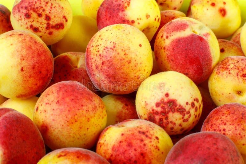 Κίτρινος-κόκκινο υπόβαθρο βερίκοκων φρούτων Πολλά μικρά ώριμα οργανικά βερίκοκα στην αγορά στοκ φωτογραφία με δικαίωμα ελεύθερης χρήσης