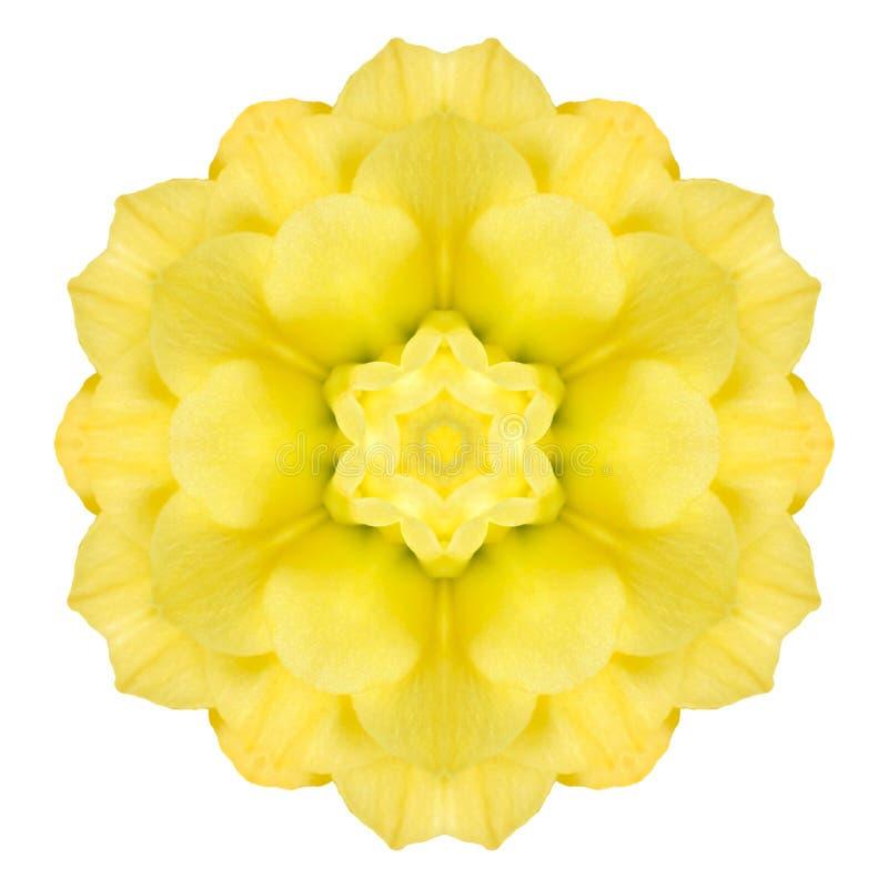 Κίτρινος ομόκεντρος αυξήθηκε λουλούδι που απομονώθηκε στο λευκό Σχέδιο Mandala στοκ φωτογραφίες