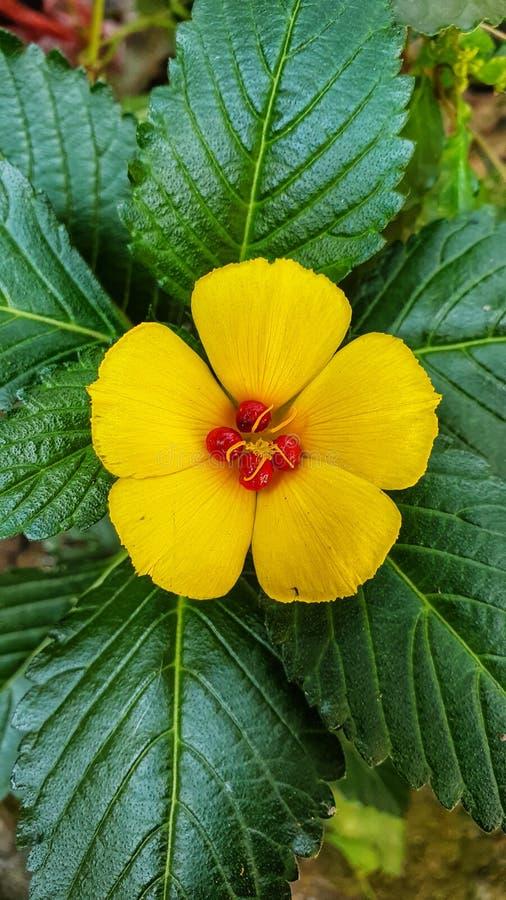 Κίτρινος σε πράσινο στοκ εικόνα με δικαίωμα ελεύθερης χρήσης