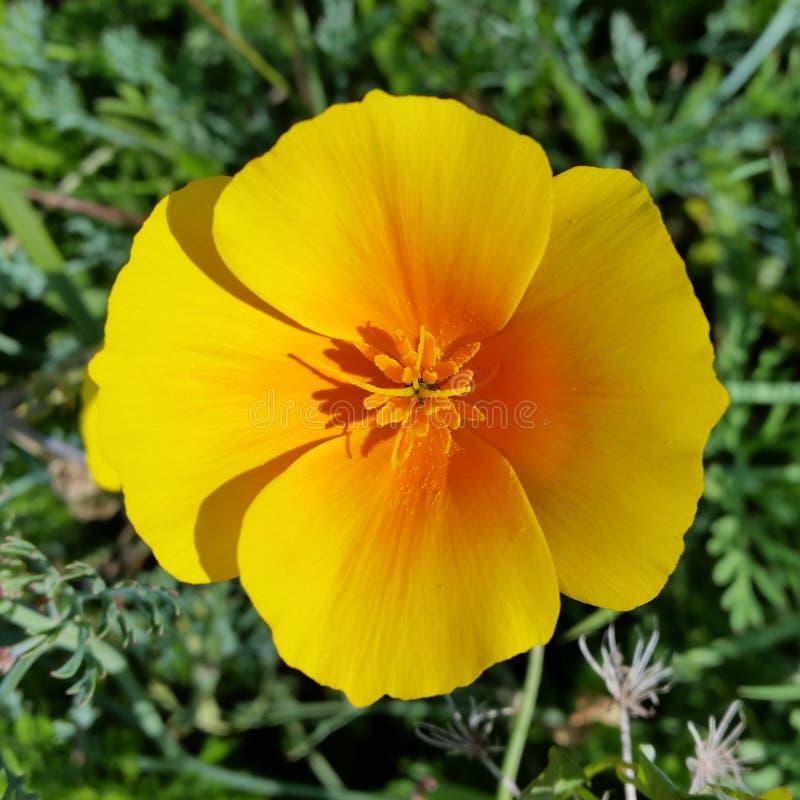 Κίτρινος του φθινοπώρου στοκ φωτογραφίες