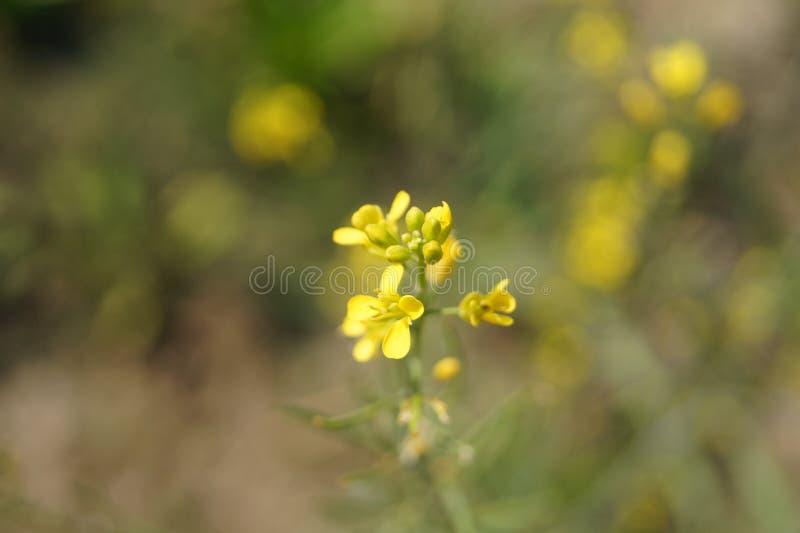 κίτρινος στοκ φωτογραφίες με δικαίωμα ελεύθερης χρήσης