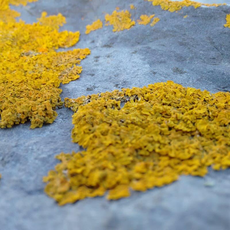 Κίτρινος-Stone στοκ φωτογραφία με δικαίωμα ελεύθερης χρήσης