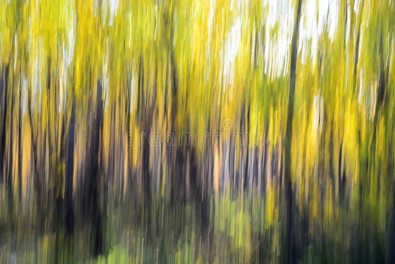Κίτρινο δάσος (paning επίδραση) στοκ εικόνα με δικαίωμα ελεύθερης χρήσης
