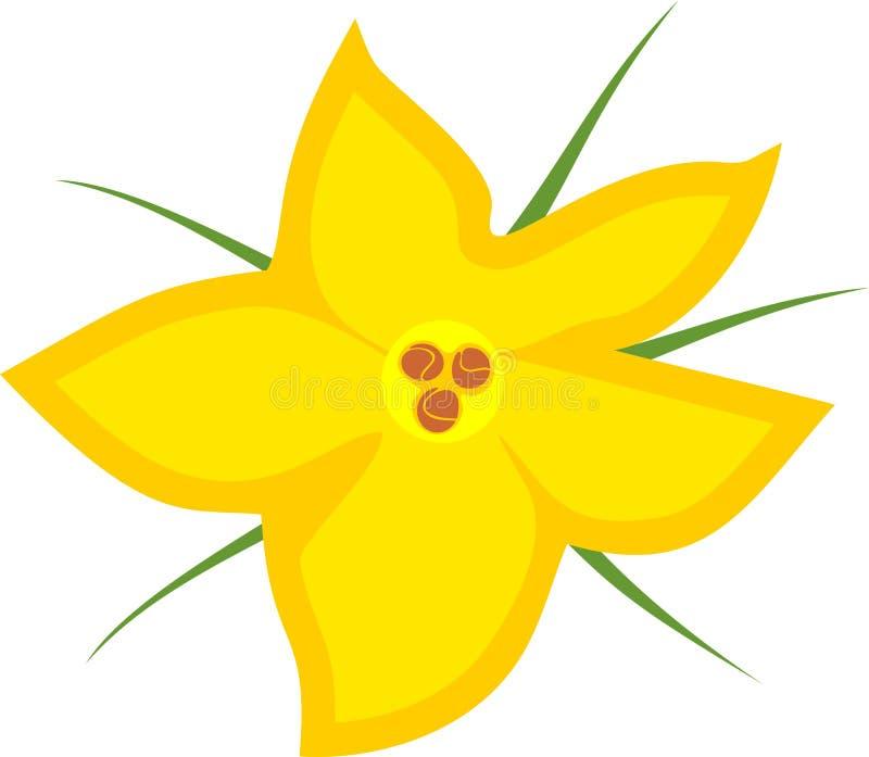 Κίτρινο αρσενικό λουλούδι κολοκύθας απεικόνιση αποθεμάτων
