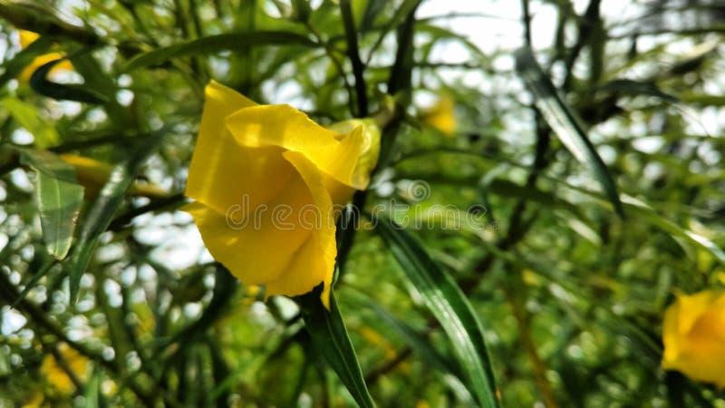 Κίτρινο δέντρο στοκ φωτογραφία με δικαίωμα ελεύθερης χρήσης