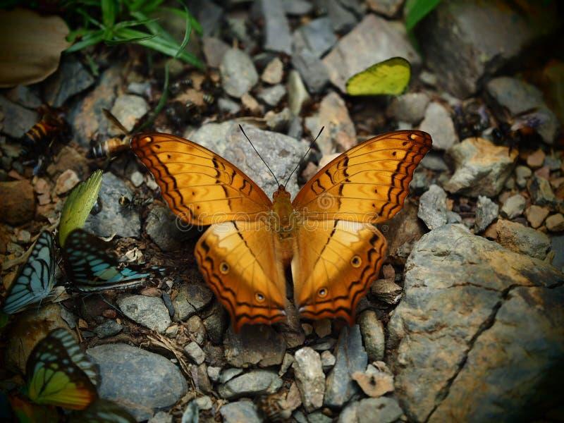 Κίτρινο και μαύρο φτερό σχεδίων με την πεταλούδα κεραιών σκαρφαλωμένο επάνω στοκ φωτογραφία με δικαίωμα ελεύθερης χρήσης