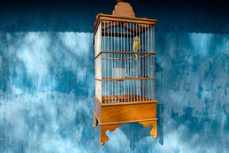 Κίτρινο καναρίνι σε ένα κλουβί στο μπλε υπόβαθρο στοκ φωτογραφίες με δικαίωμα ελεύθερης χρήσης