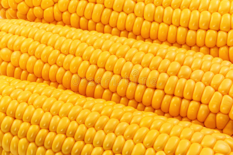 Κίτρινο καλαμπόκι στοκ εικόνες με δικαίωμα ελεύθερης χρήσης