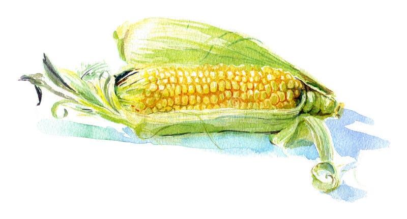Κίτρινο καλαμπόκι απεικόνιση αποθεμάτων